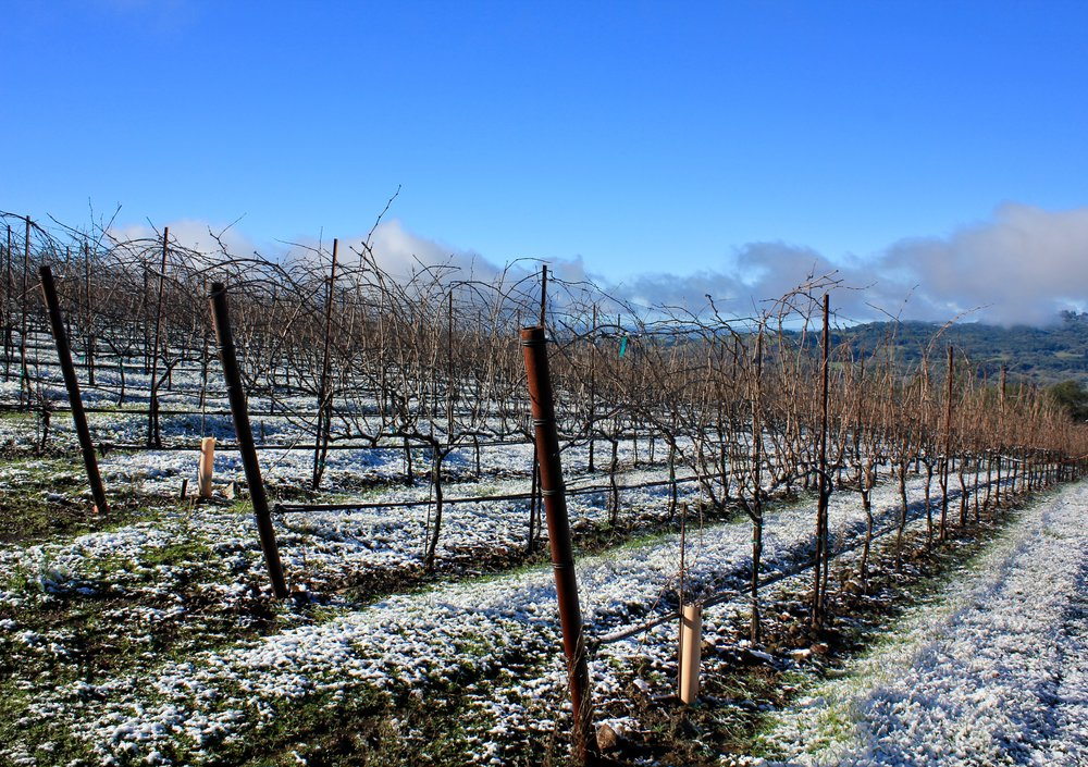 The Syrah block after a rare winter snowfall