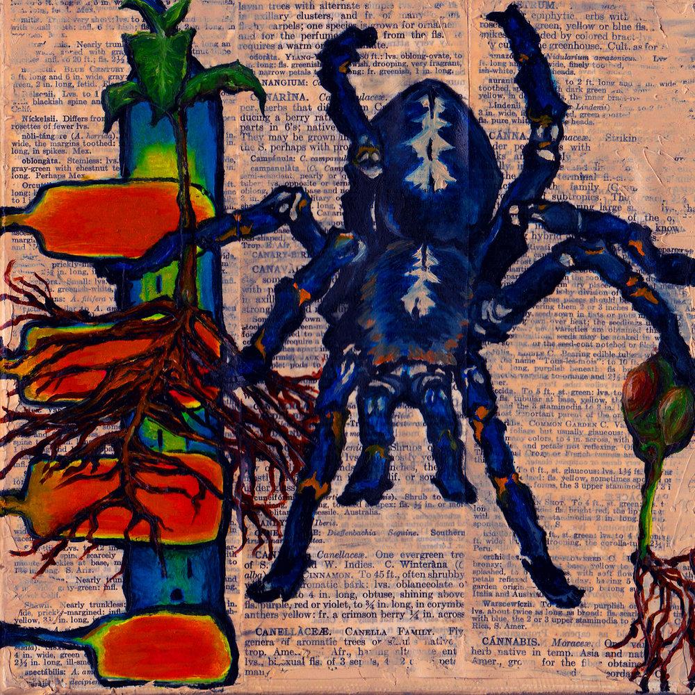 emclaughlin_Blue Tarantula Painting.jpg