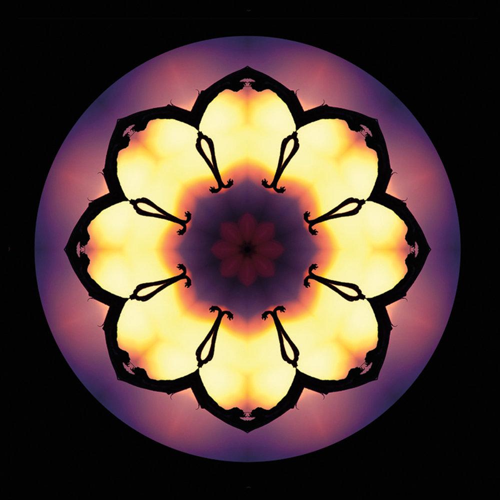 Barrick04_SolarEclipseBlossom.jpg