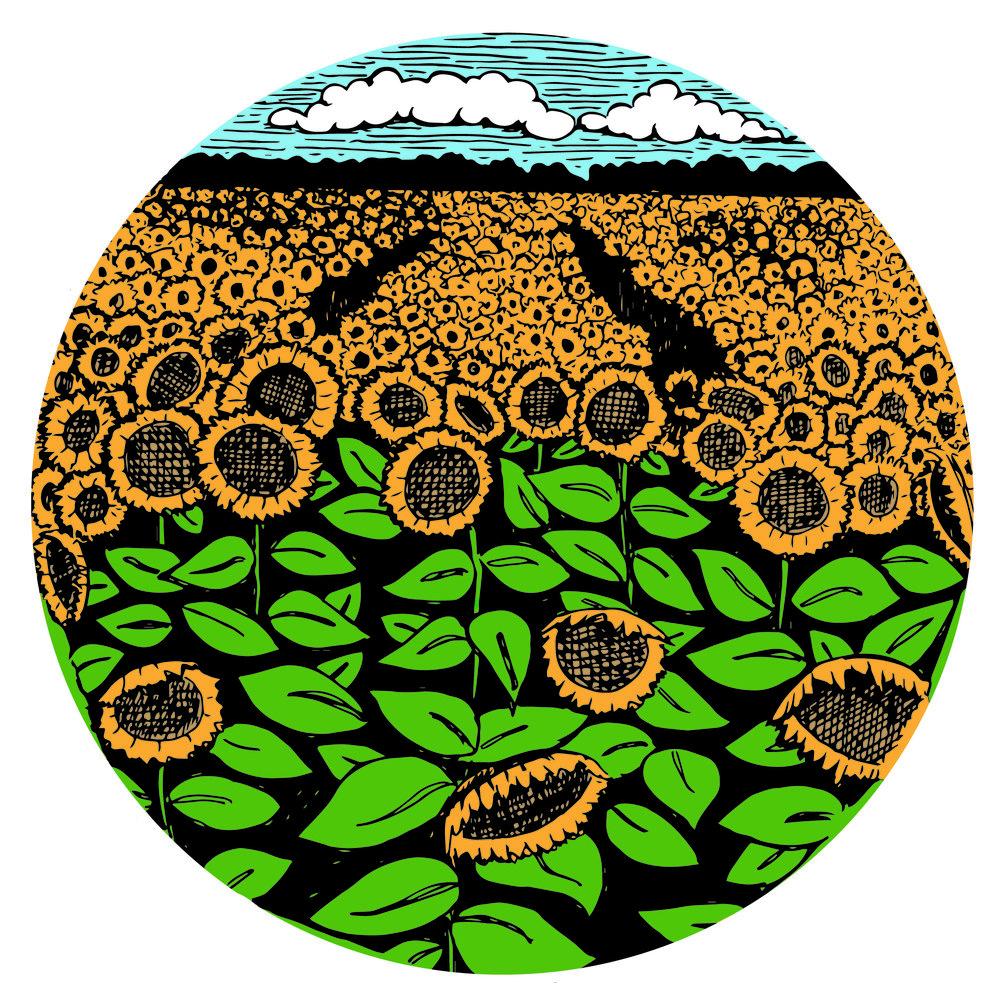 eknopf_sunflower.field.jpg