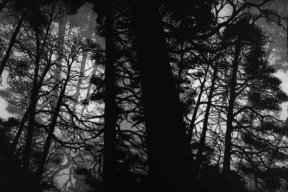 Wellington Woods II - Etching - 40cm x 60cm - 2016   (Edition of 45)