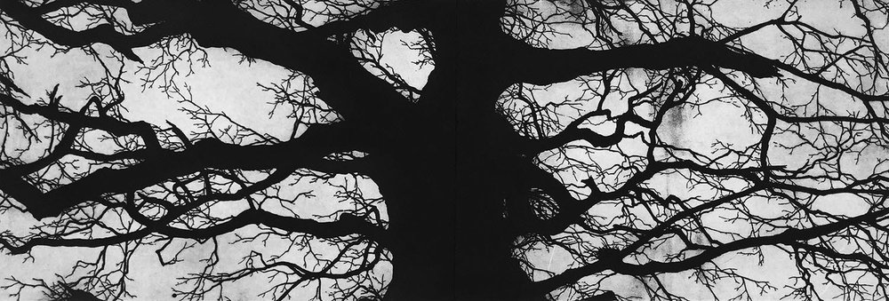 The Oak, Richmond -   Etching - 40cm x 120cm - 2017 (edition of 45)