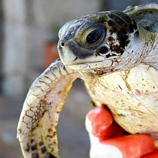 UF Whitney Lab and Sea Turtle Hospital