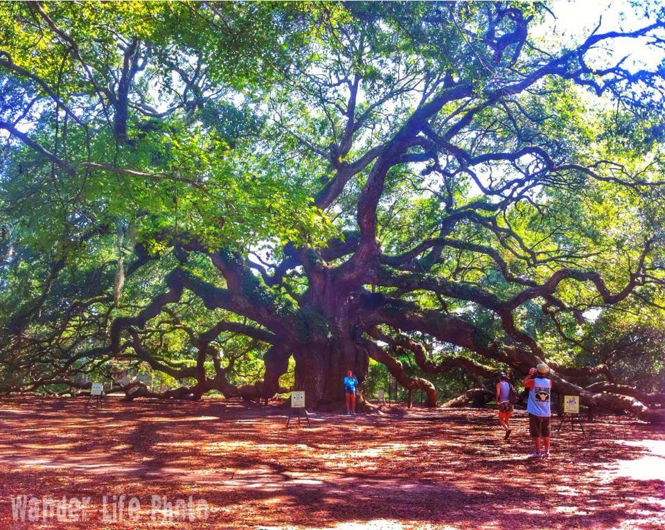 The Angel Oak Tree John's Island South Carolina