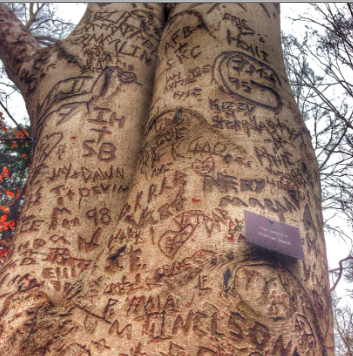 3 Trees were covered in names, kind words, and unforgotten memories.