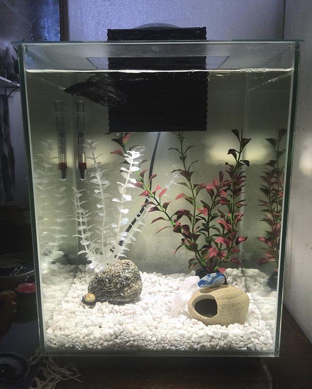 Full view of Edward Scissorfins' tank.