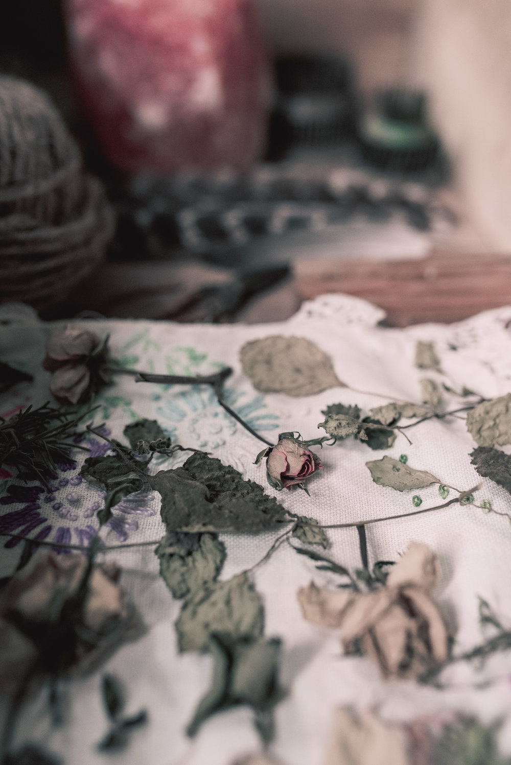 Dried flowers vintage curiosities photography