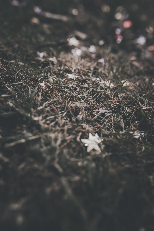 grow, dreams, grow. -