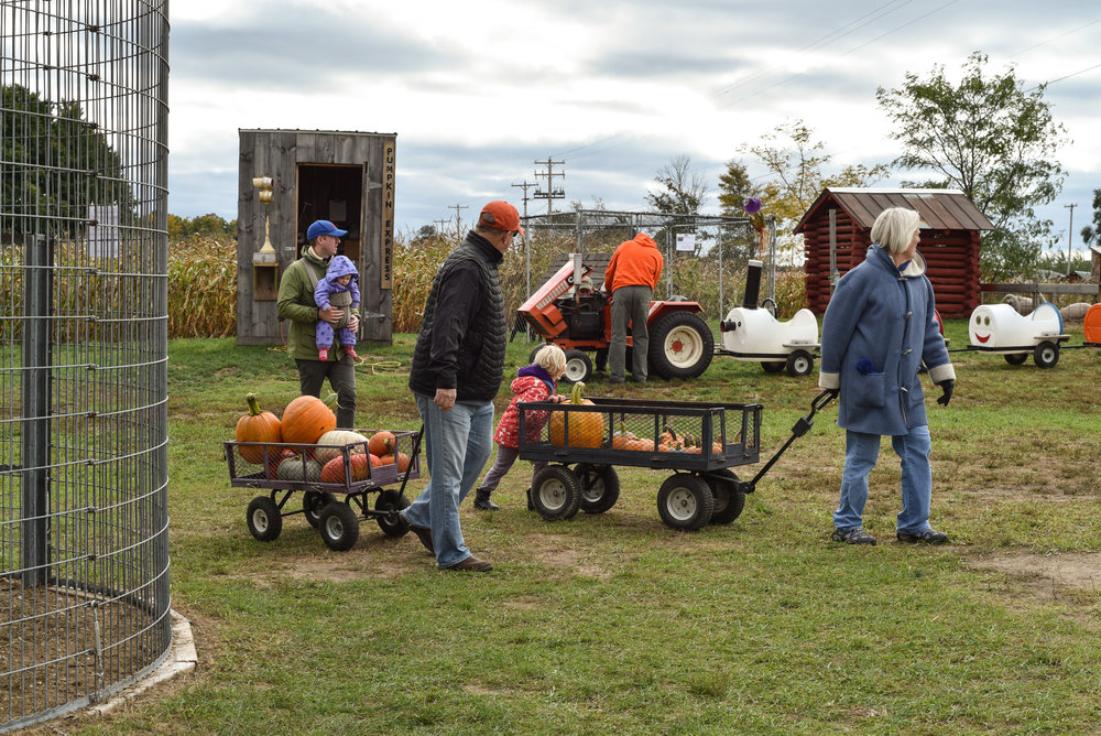 Pumpkinpatch-19.jpg