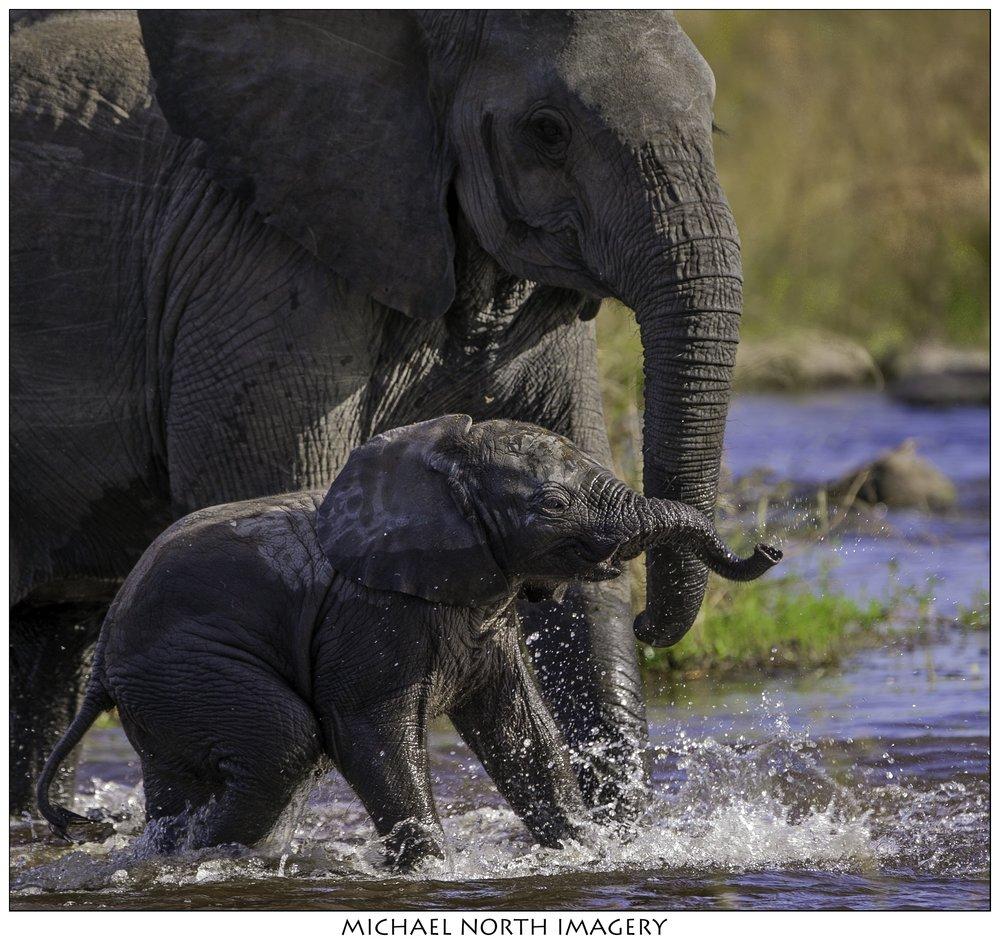 Elephant-1307.jpg