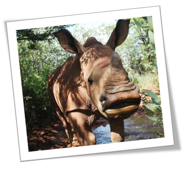 Baby Kumba from The Rhino Orphanage
