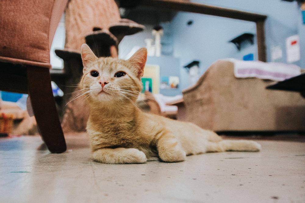 Cat cafe-5.jpg