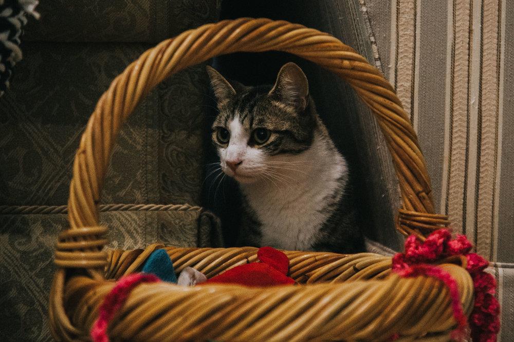 Cat cafe-6.jpg