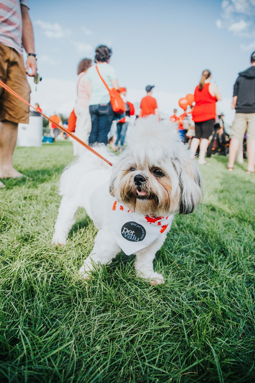Even the Cambridge pets show off their patriotism at the Riverside Canada Day festival.