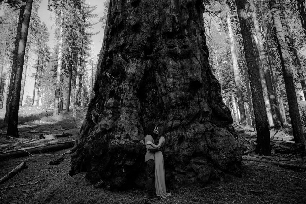 Sequoia-National-Forest-Redwoods-Hiking-Engagement-1.jpg