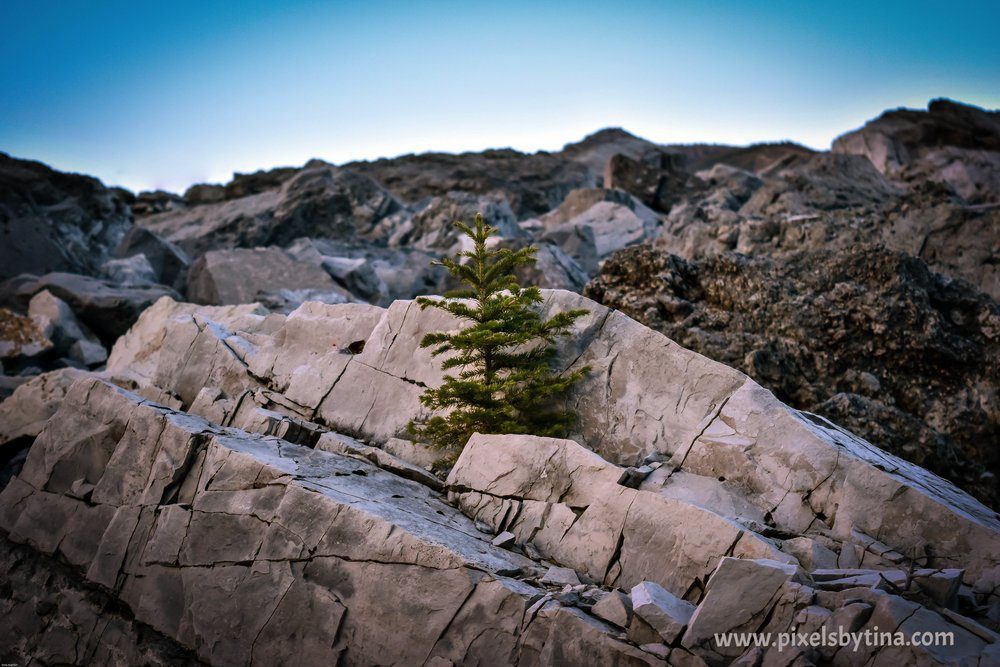 frank slide in the crowsnest pass, alberta, canada - nature photography - pixels by tina