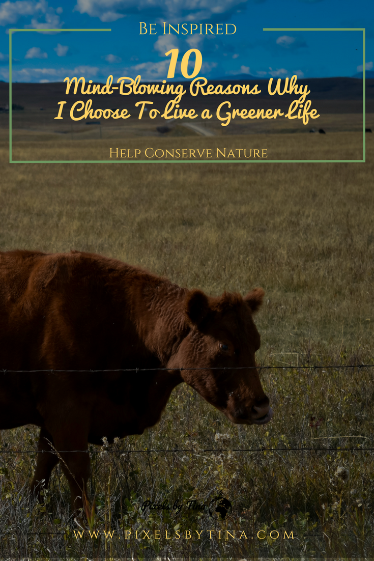 Live a green lifestyle with my help - lifestyle blog - pixels by tina
