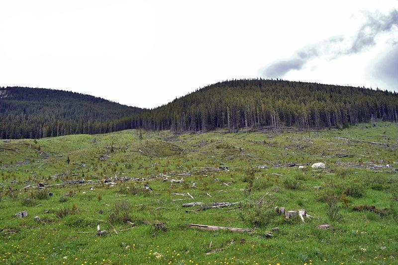 deforestation in kananaskis country, alberta, canada - lifestyle blog - pixels by tina