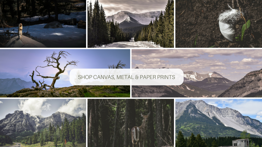 Outdoor Photographer - Alberta, Canada - Pixels by Tina