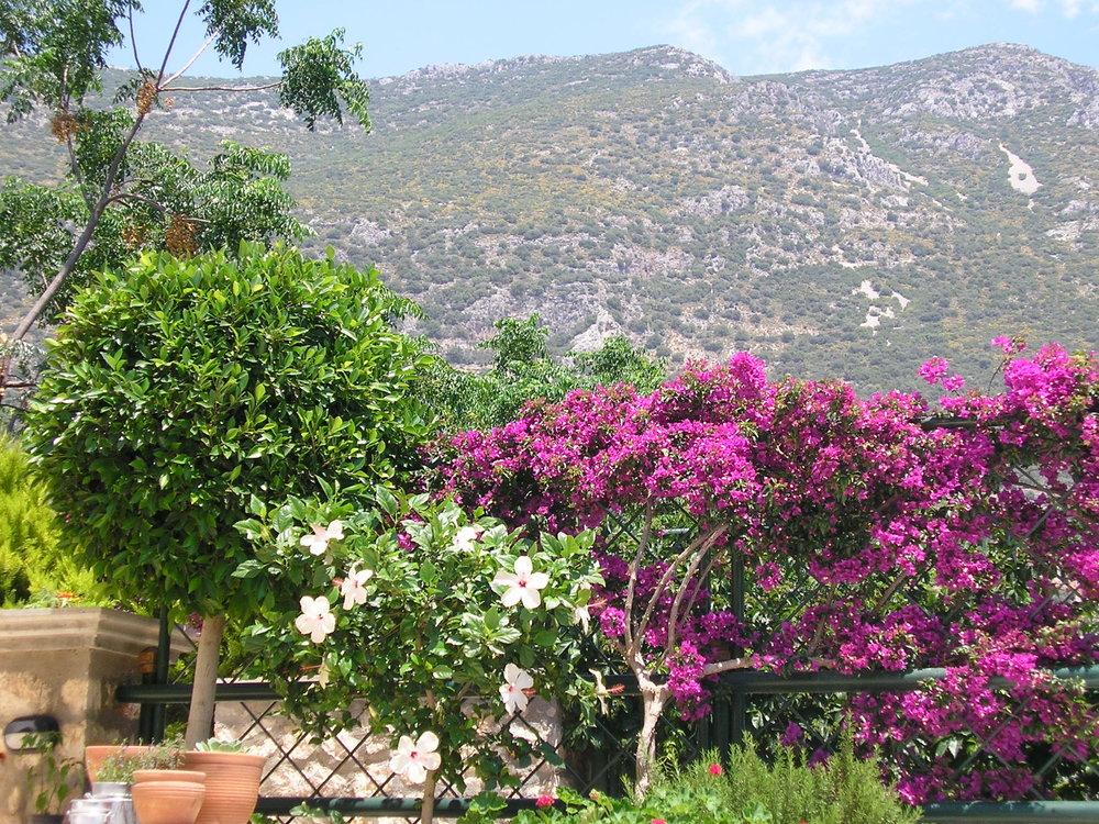 Poppy Villa Garden.JPG