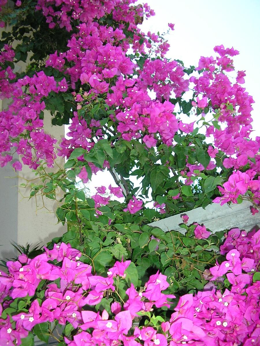 Garden area Poppy Villa Kalkan.JPG