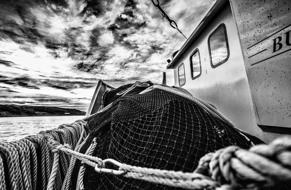ocean-fish-photolib-06.jpg