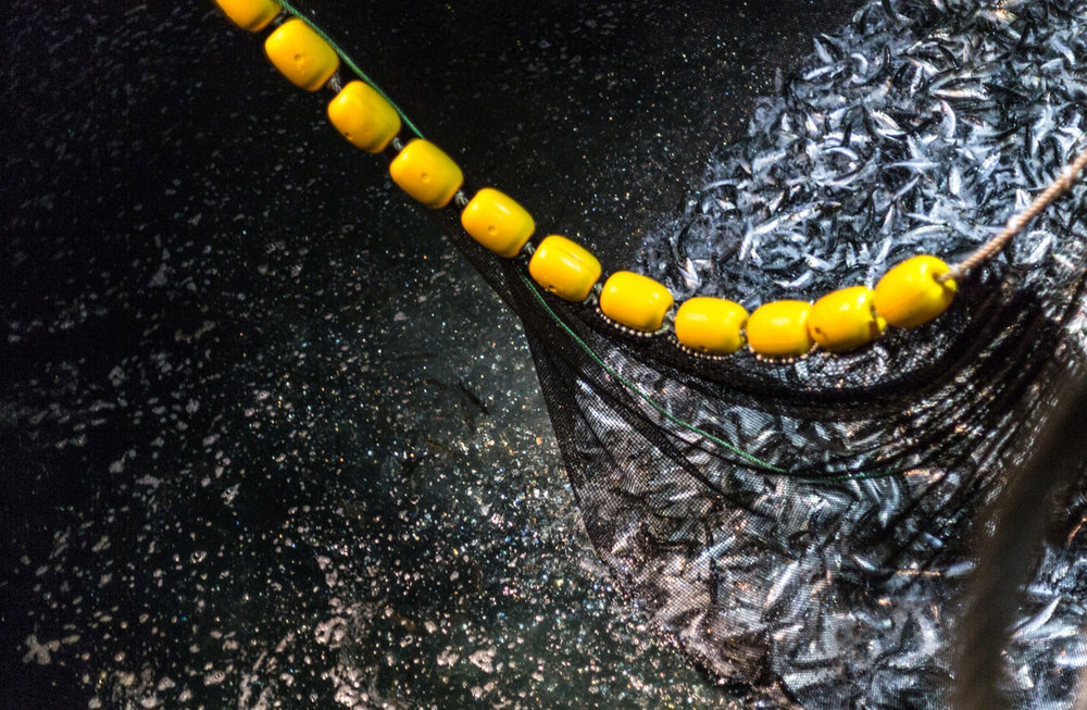 ocean-fish-photolib-08.jpg