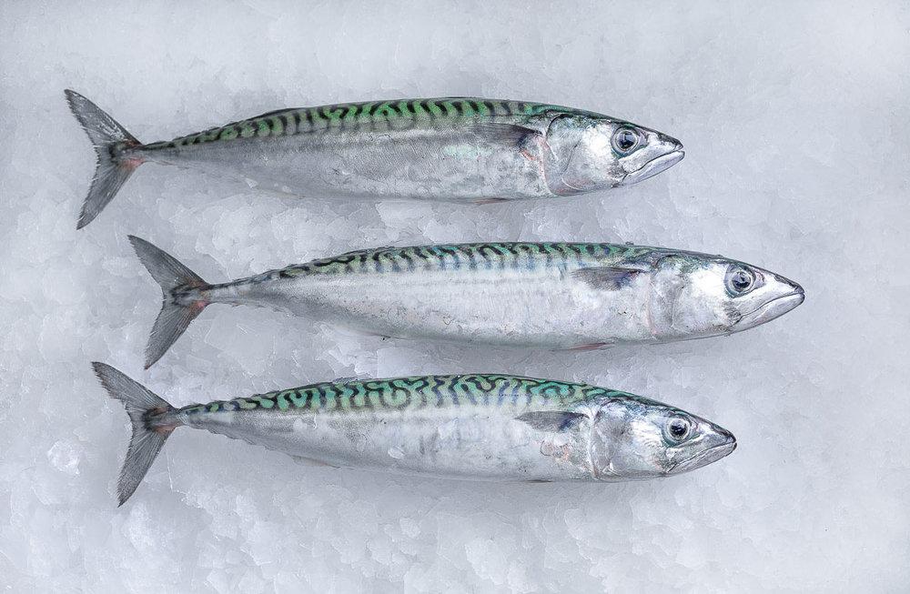 ocean-fish-photolib-14.jpg