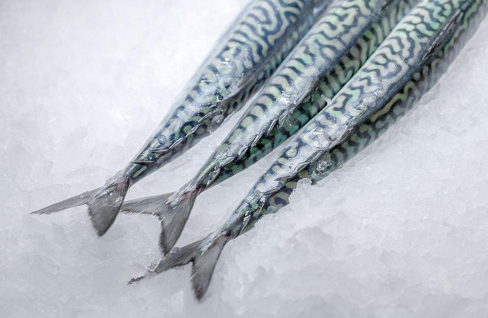 ocean-fish-photolib-15.jpg