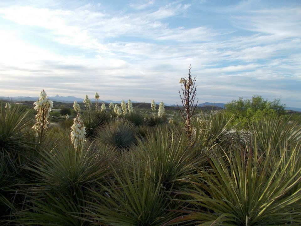 landscape arivaca.jpg