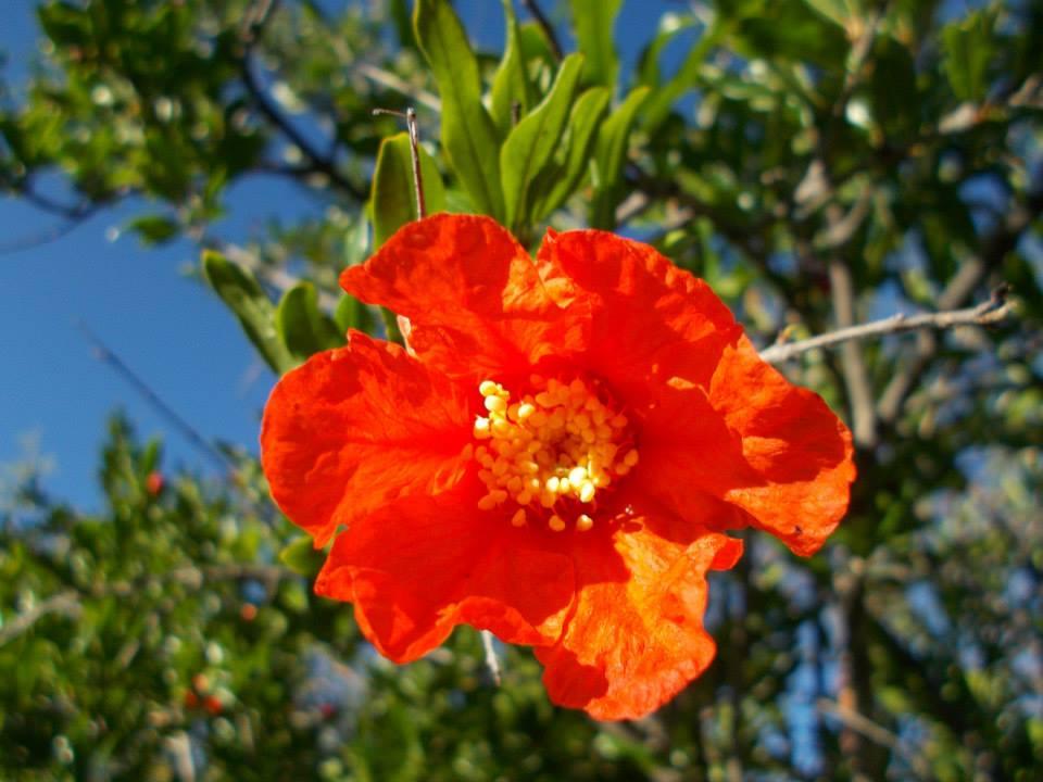 desert flowers in arivaca.jpg