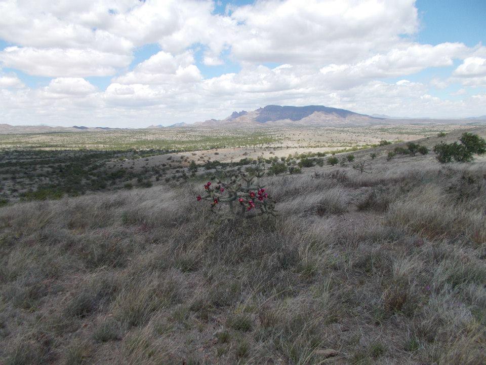 arivaca flowers landscape.jpg