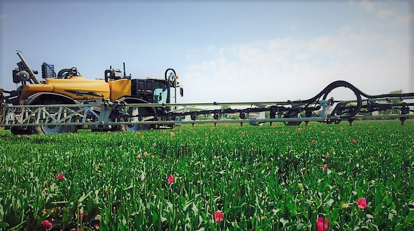 Challenger Rogator Sprayer in the Netherlands spraying tulips.jpg