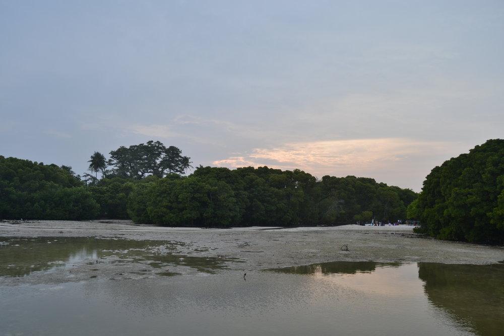 Mangrove in Huraa.jpg
