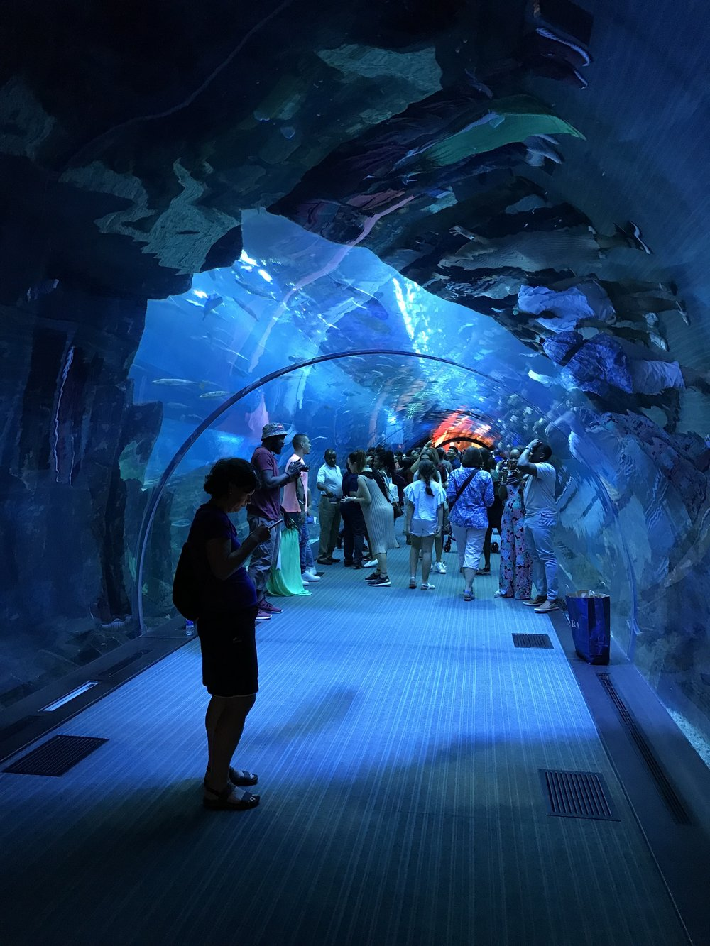 Dubai Mall Aquariun Tunnel.jpg