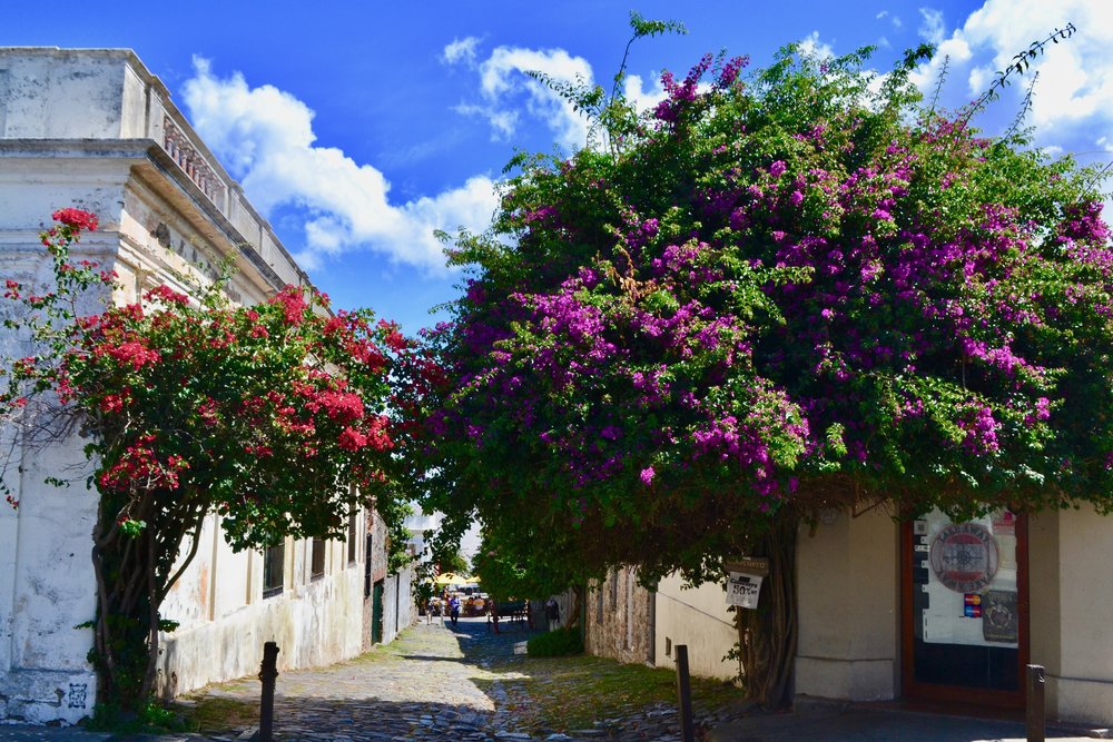 Colorful Trees in Colonia del Sacramento