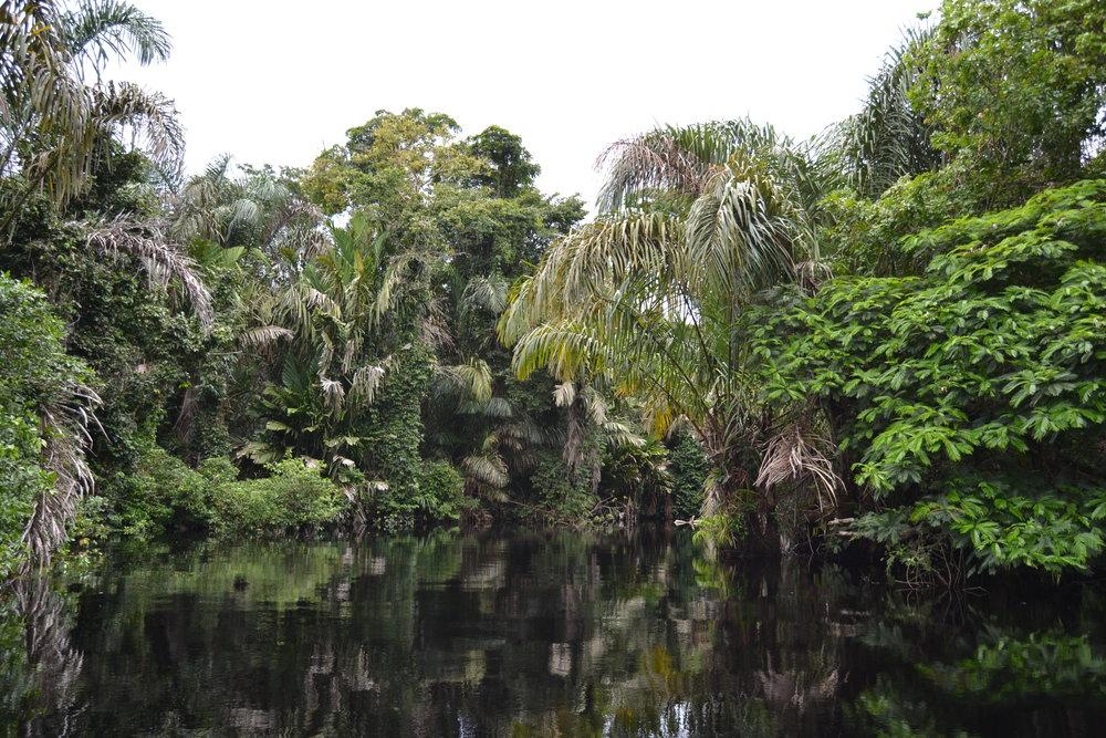 Foliage in Tortuguero National Park.jpg