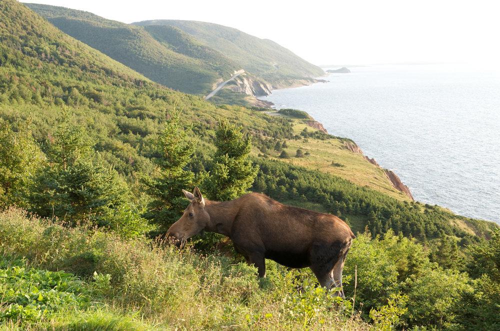 Photo: Tourism Nova Scotia