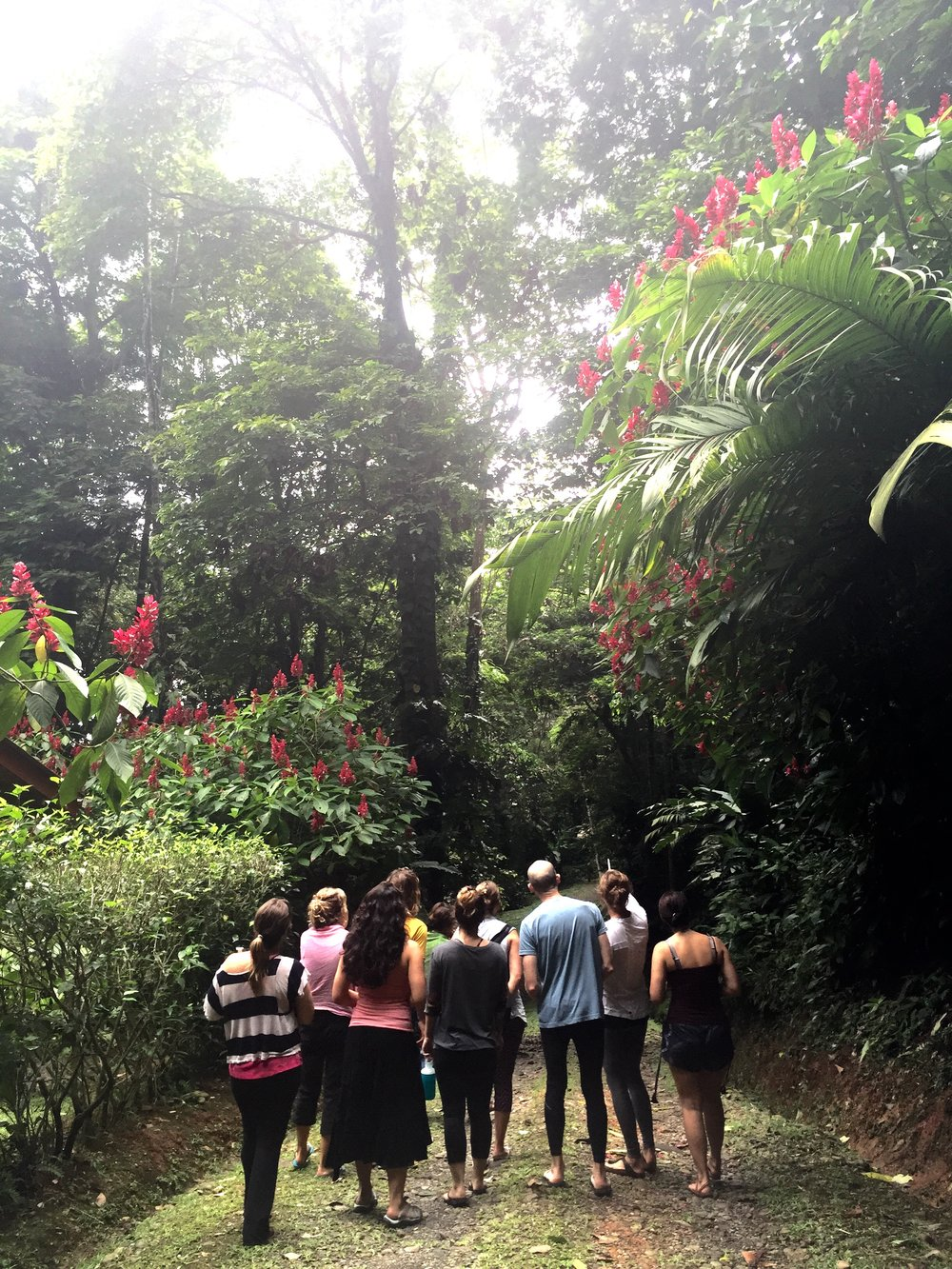 Rainforest Yoga Teacher Training Costa Rica