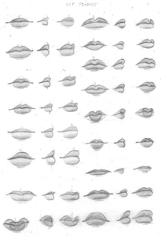 lip proportions 2.JPG