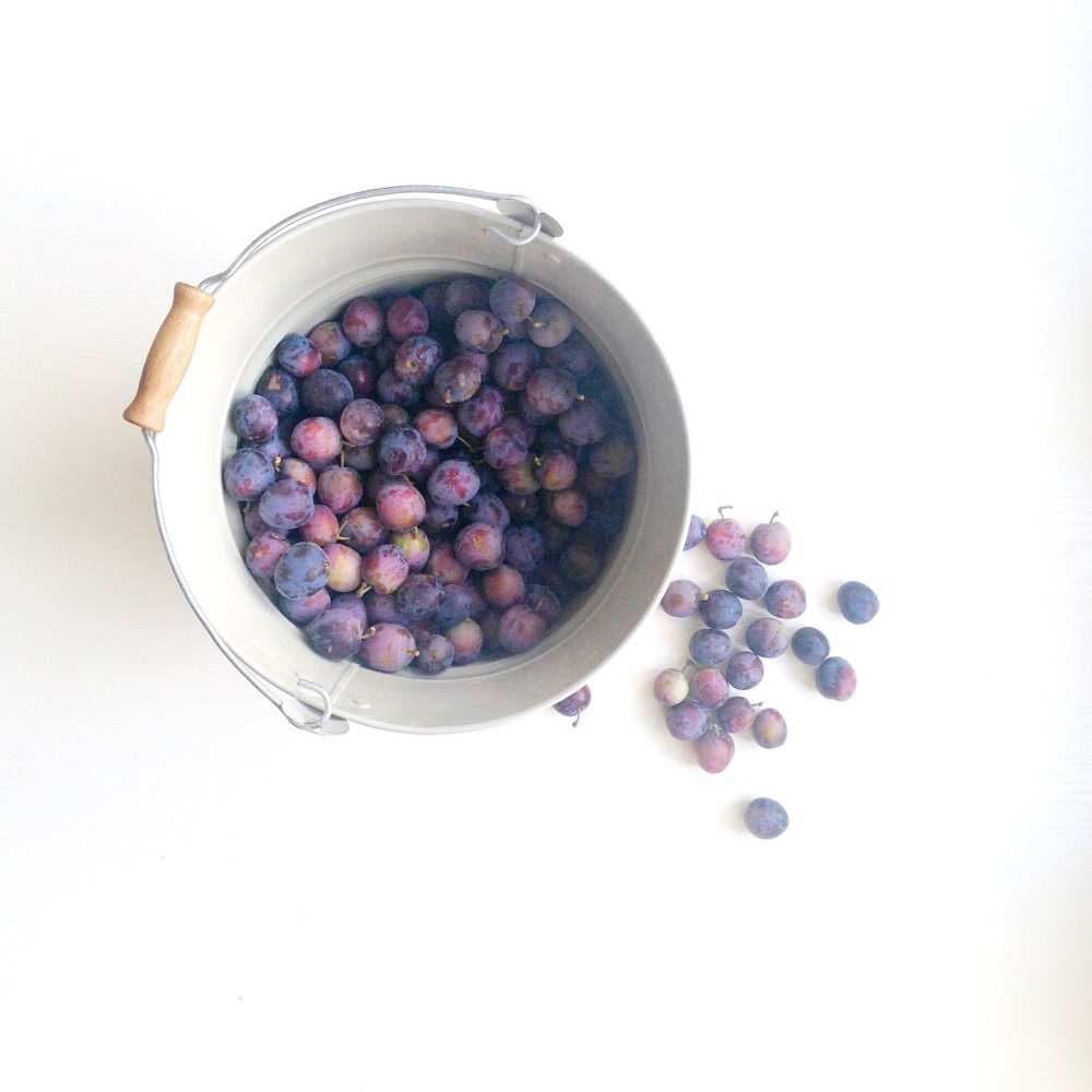 bucket-of-plums-1024x1024