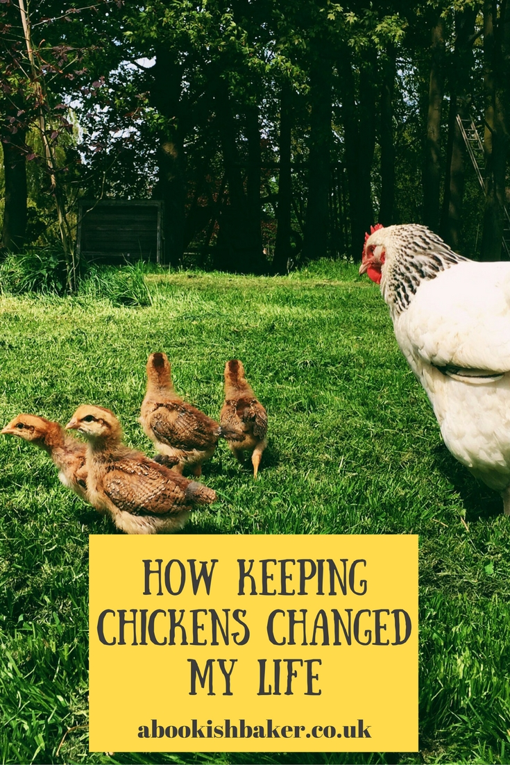 how keeping chickens changed my life