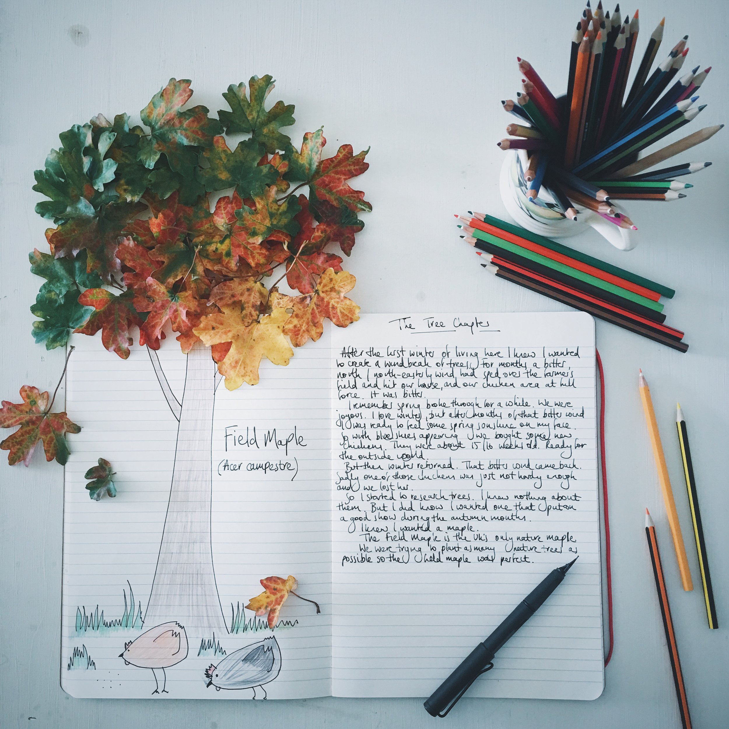 five ways writers can use instagram