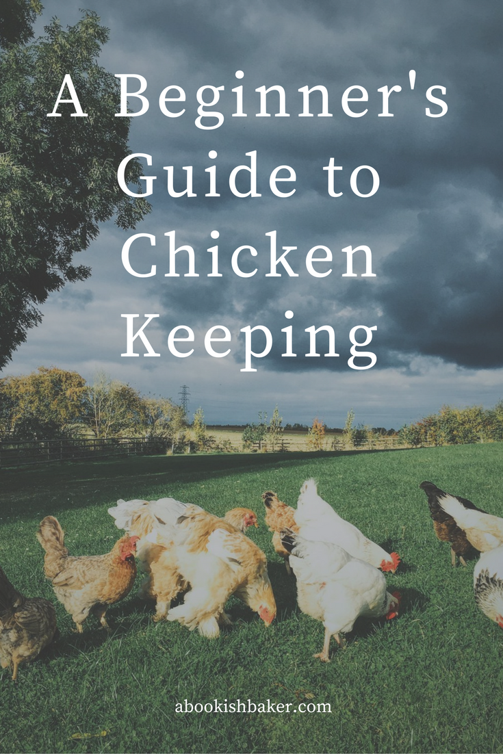 A beginner's guide to chicken keeping