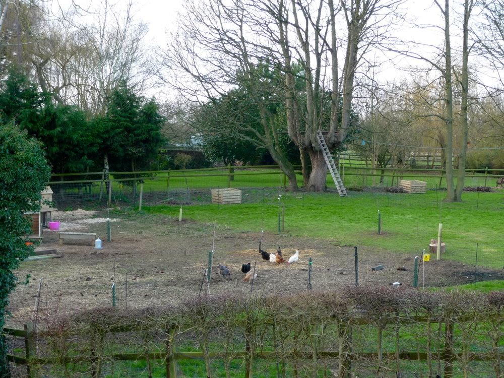the orchard at beginning.jpg