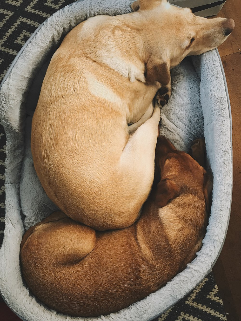 warm luxury dog bed for two labradors