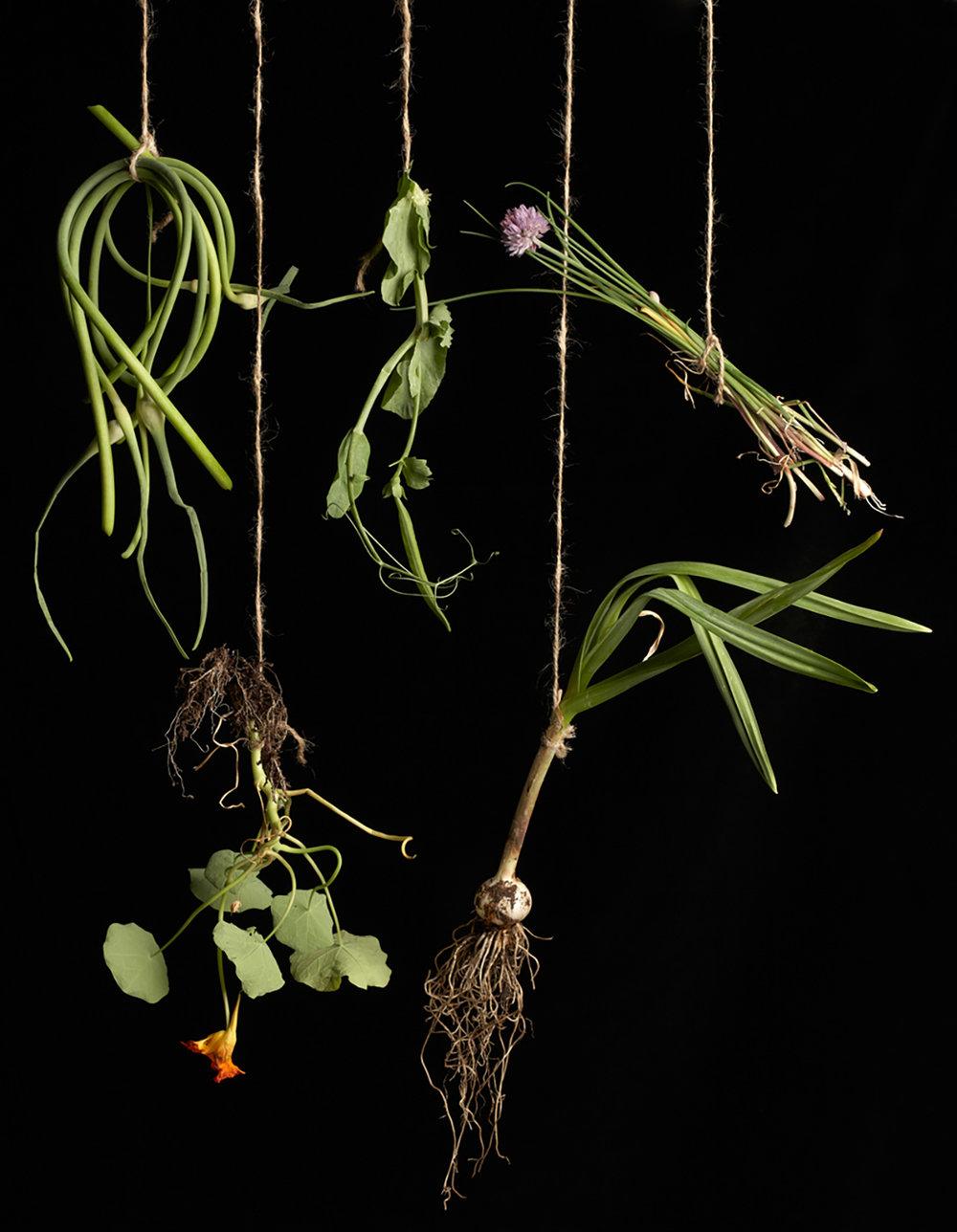 Hanging greens.jpg