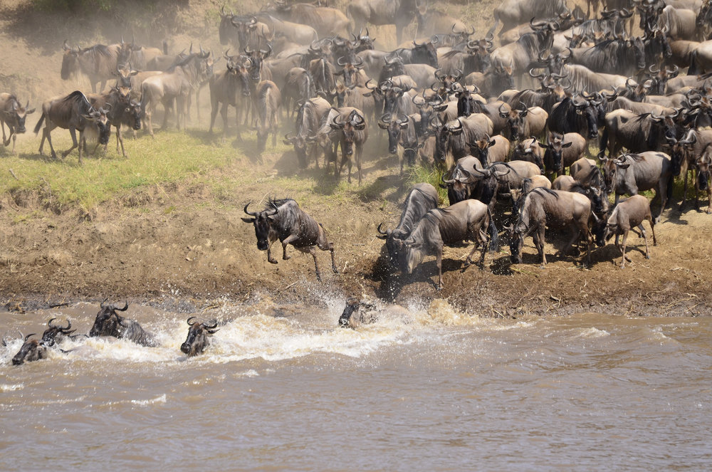 Africa's Great Migration.jpg