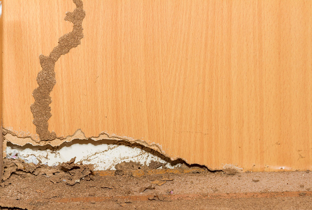 Mud tubes built by Subterranean Termites for above-ground travel & Termite Inspection | Termite Extermination