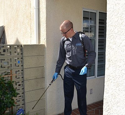 Pest control -